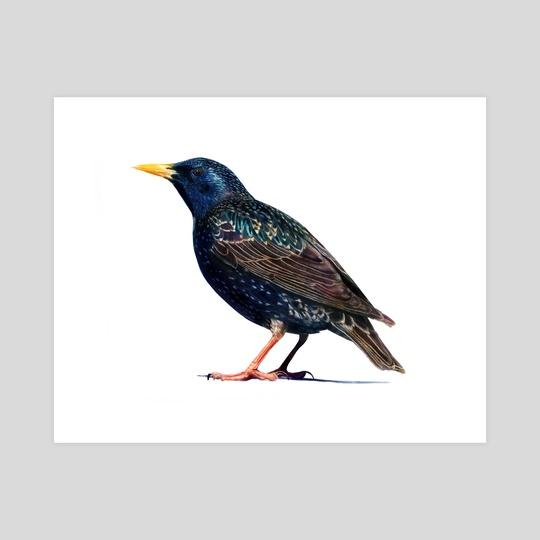 European starling by Leeah Whittier