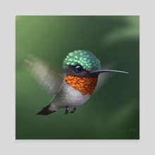 Hummingbird - Canvas by Shaun Keenan