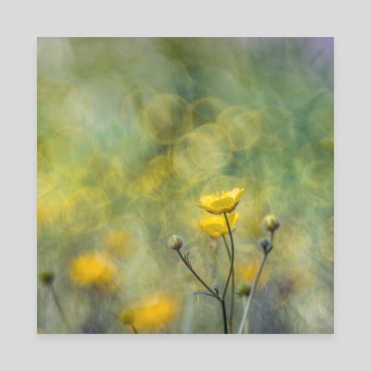 Floral impression XIII by Angel Yanev