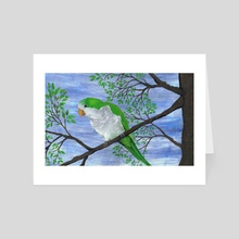 Quaker parrot - Art Card by Bianca Wisseloo