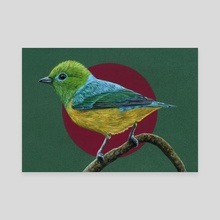 Blue-naped Chlorophonia - Canvas by Mikhail Vedernikov