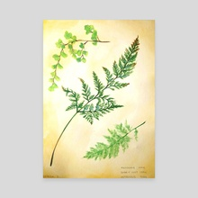 Fern - Canvas by Cassandra