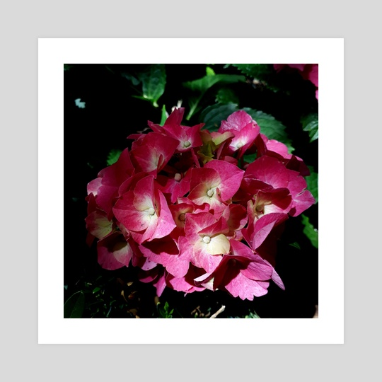Magenta Hydrangea Bouquet by Gabriela Handal