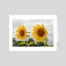 Sunflowers - Art Card by Ashley Gedz