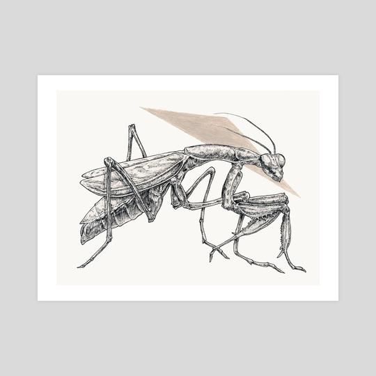 Mantis Study by Jonny Warren