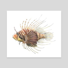 Pterois radiata - Radial Firefish (Lionfish) - Canvas by Rene Martin