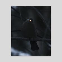 Black Bird - Canvas by Sannamari Sallmén
