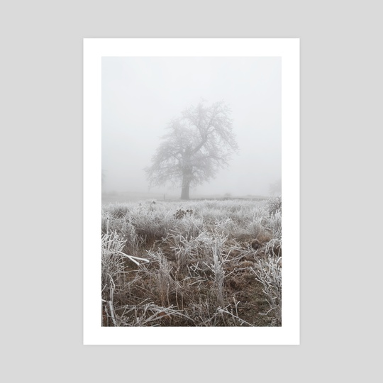 Frozen tree (I) by Svetlana Dikhtyareva