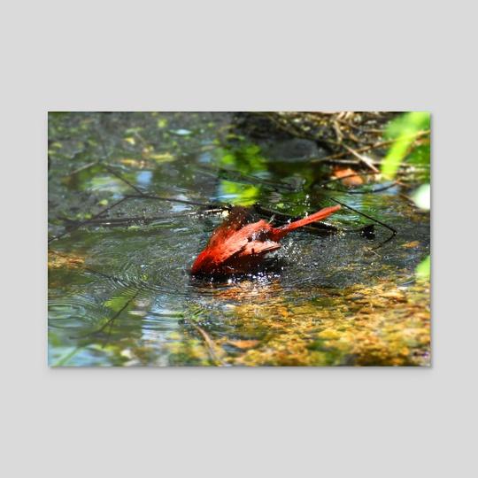 Bath Time in Red (Cardinal #1) by Tim Ellis