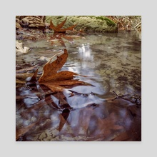 A u t u m n • L e a v e s - Canvas by Gees Art Photography