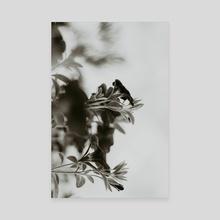 2020 - Canvas by Jillian Noss