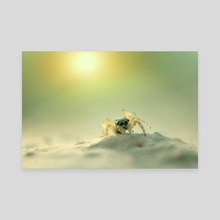 Macro Photography - Canvas by Martin Nittala