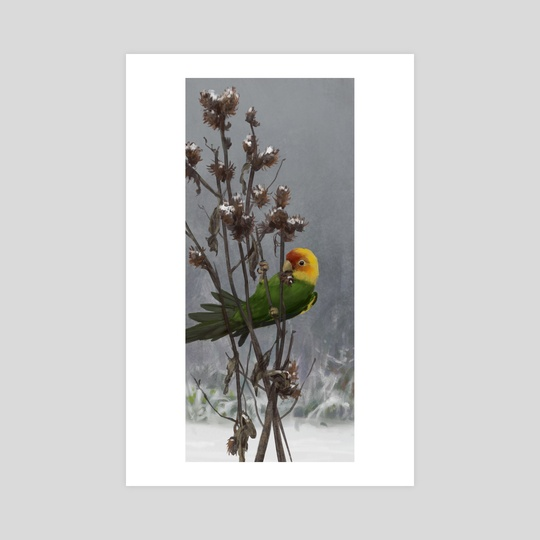 Carolina Parakeet by Andrew Sonea
