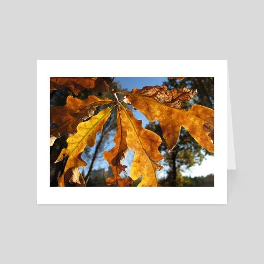 Autumn leaves against the blue sky by Dmytro Rybin