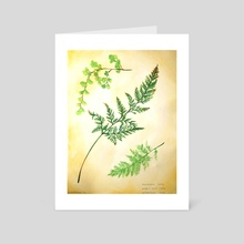 Fern - Art Card by Cassandra