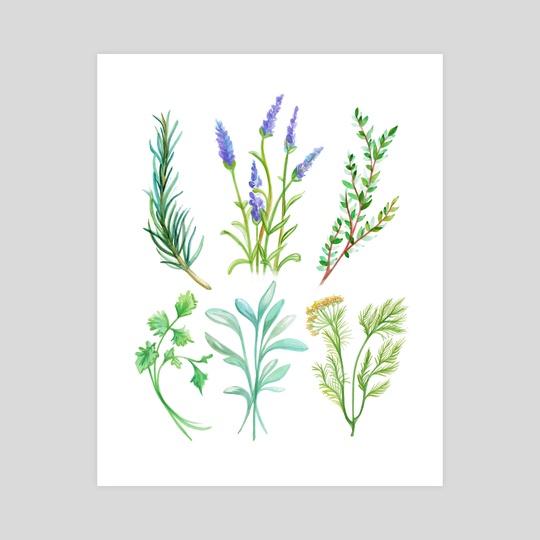 Herbs  by Amanda Sharples