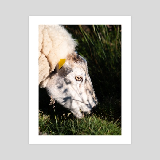 Hungry Goat by Teilo Wessells
