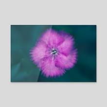 Pink - Acrylic by Joana Lourenco