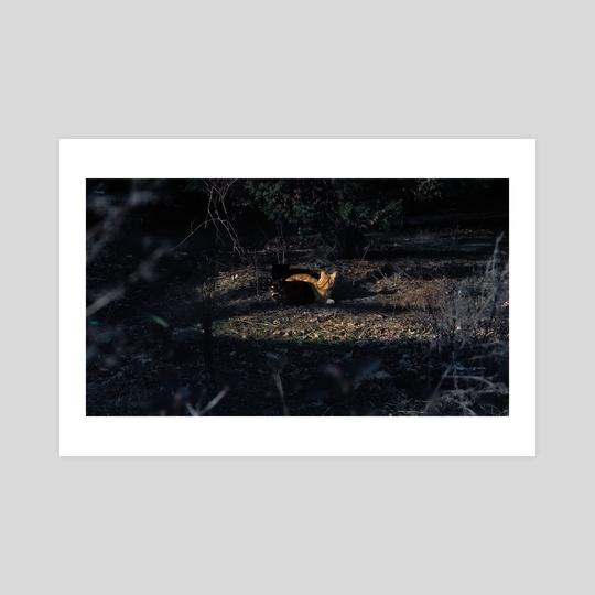Stray Cats, New York City (2019-12-GNY-52) by Vlad Meytin