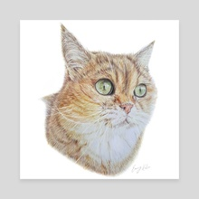 Cat pencil drawing - Canvas by Emmy Kalia