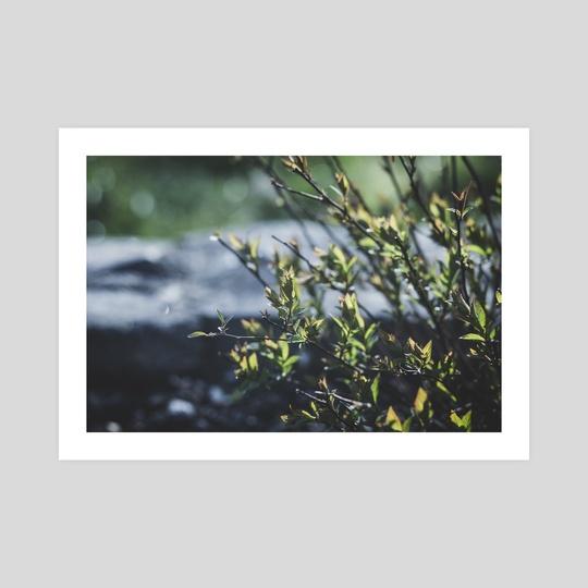 Belated spring 4 by Yauhen and Ksenia Lokotko