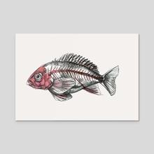 Acadian Redfish - Acrylic by Charli Vince