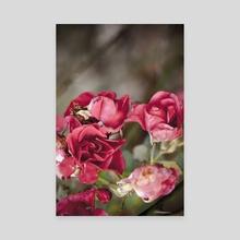 Garden roses - Canvas by Chiara Cattaruzzi
