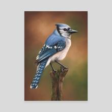Blue Jay - Canvas by Richard Macwee
