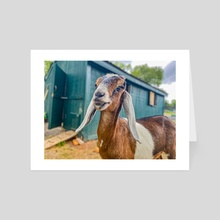 Chester - Art Card by Catskill Animal Sanctuary