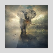 the elephant - Acrylic by Even Liu