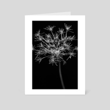 Hogweed - Art Card by Elena Prokofyeva