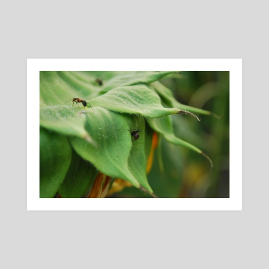 Sunflower Ant by Alina AllieChi