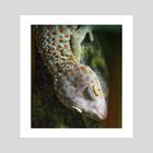 Tokay Gecko - Art Print by Vlad Stroe