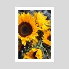 SunFlowers - Art Print by Jazzmin Lanzo