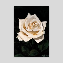 White Rose #5 - Canvas by Clarisse Silva