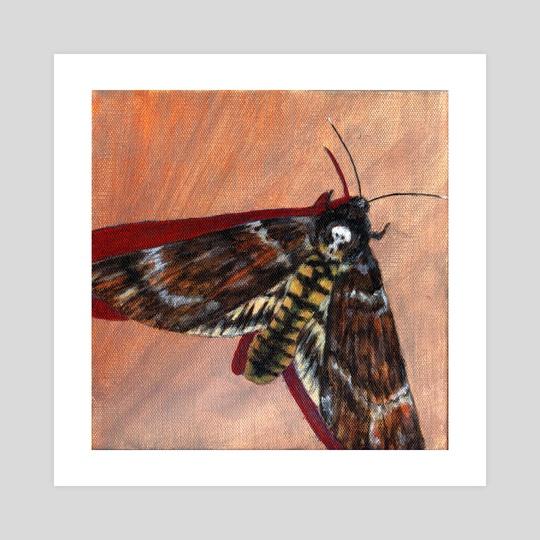 Death's-Head Hawk Moth by Erin Hankins