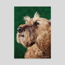 Irish terrier - Canvas by Carl Conway