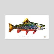Labeled Brook Trout - Canvas by Eric VanAllen