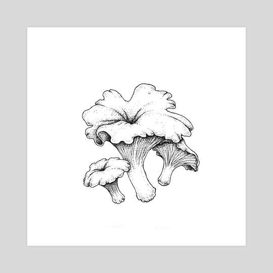 Cantharellus cibarius by Rekka Bellum