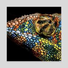 Panther Chameleon - Canvas by Tayla Köhler
