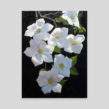 Dogwood Blossoms - Canvas by Armand Cabrera