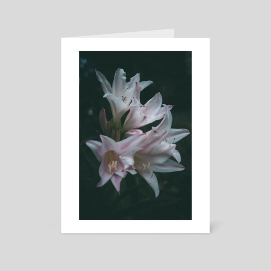 Lillies in Pink by Kristin Elsen