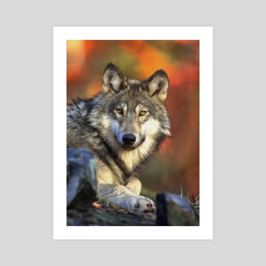 AUTUMN WOLF by Eddie J. L. Christian