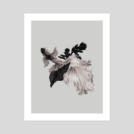 Betta Splendens by Laura H. Rubin