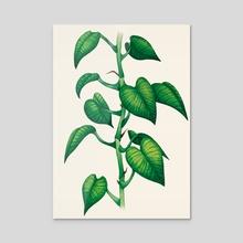 Pothos - Acrylic by Golden Moth