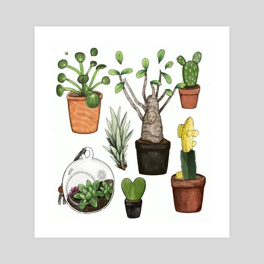 succulents by riotopolis