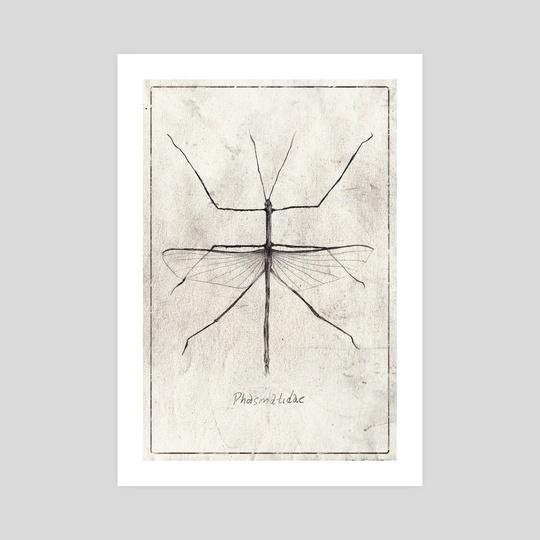 Phasmatidae by Mike Koubou