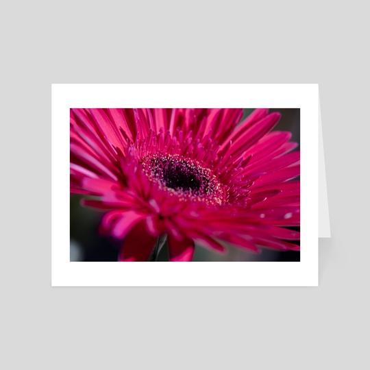 Magenta Flower by Eye Spy Nature