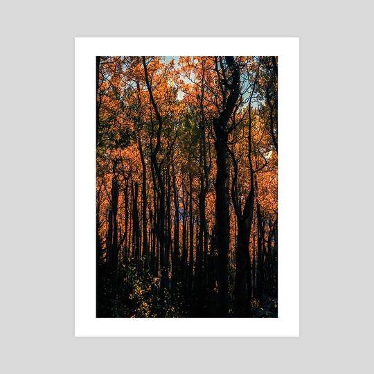 Orange Aspens by Nathan Simowitz