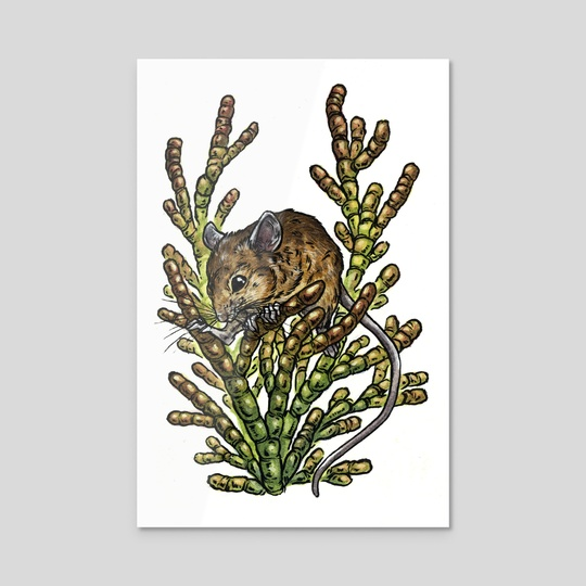 Salt Marsh Harvest Mouse by Emily Poole